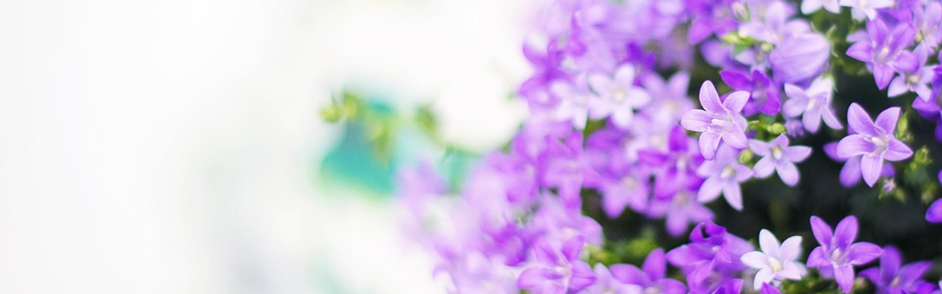 des fleurs, pour toutes les occasions
